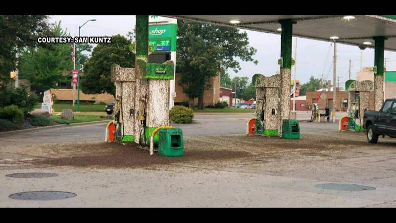 Mayflies invaded a gas station in Nekoosa, Wisconsin, piling on top of each other, the pumps...