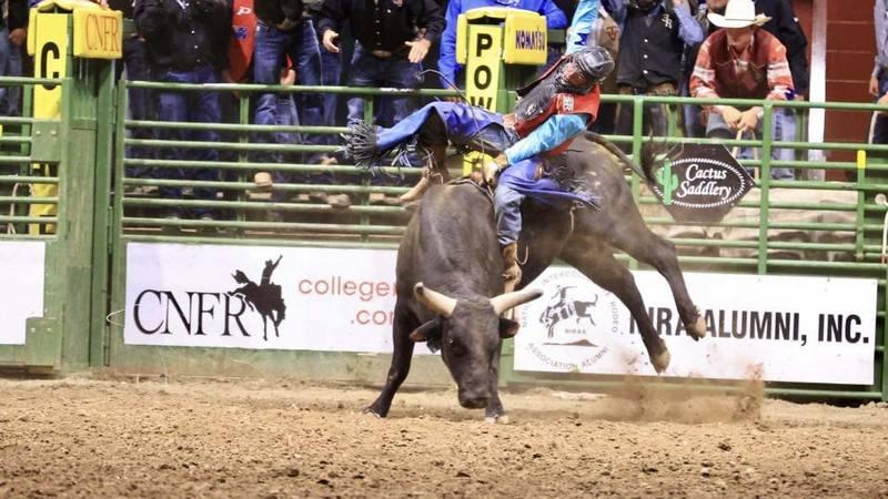 Sul Ross State University bull rider Tristen Hutchings