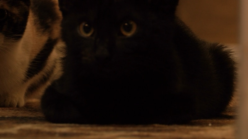 One of the black cats at Belinda's House of Cats.