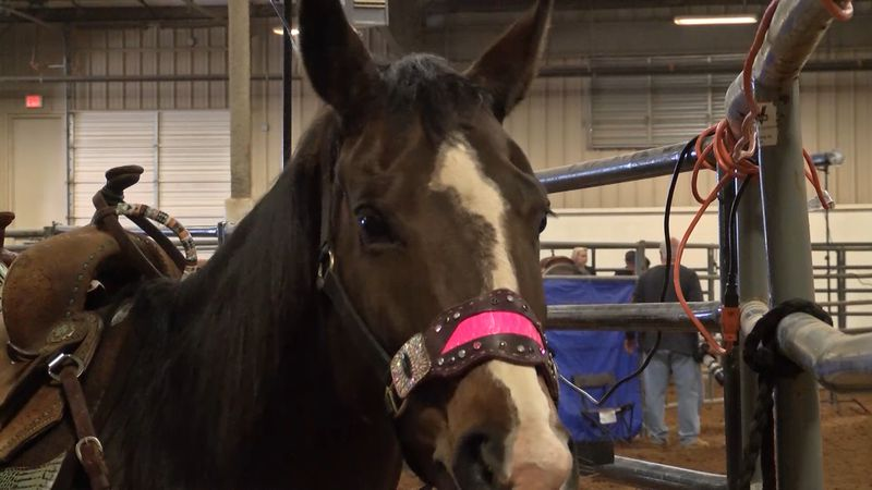 High Stakes Productions hosted a horse exhibition this weekend at the Horseshoe.