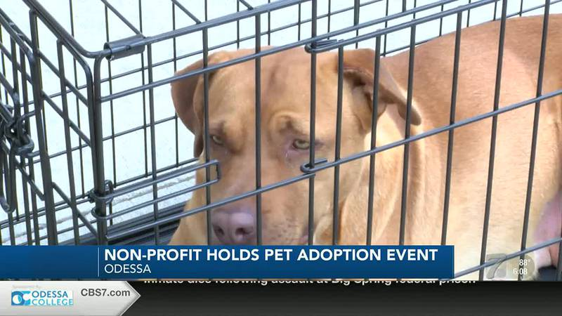 Dog Adoption in Odessa