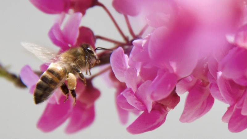Due to the previous weather events, local honeybees and beekeepers are feeling the impact.